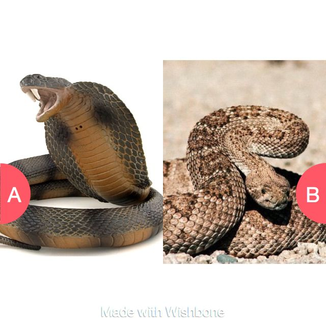 Be bitten by a cobra or a rattlesnake?? Click here to vote @ http://getwishboneapp.com/share/6771026