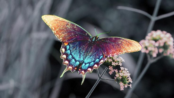 Butterfly Backgrounds | ... butterfly sitting on a branch | HD butterflies wallpapers - background