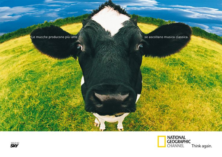 """Annuncio """"Mucca"""" - National Geographic Channel"""