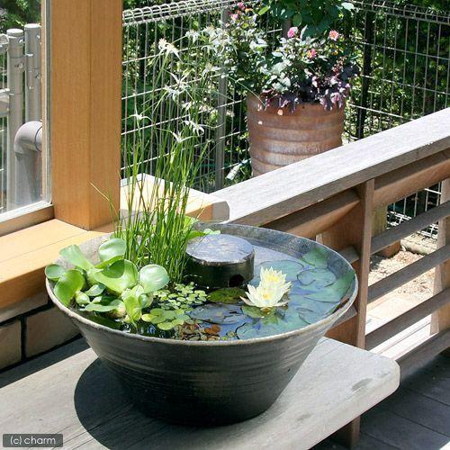 姫スイレンと浮き草で水辺を演出!メダカの飼育・繁殖に適した隠れ家付き!姫スイレンの育成とメダカ飼育を同時に楽しめるスターティングセットです。陶磁器の里として有名な栃木県芳賀郡益子町の窯元が焼き上げた睡蓮鉢には姫スイレンをはじめとした水生植物や浮き草がピッタリ。涼しげな水辺を演出してくれます。睡蓮の花言葉は「優しさ」、「清純さ」。ありったけの優しさと清らかな思いと共に色鮮やかな睡蓮セットを大切な人へ・・・。そんなプレゼントとしても最適で ……