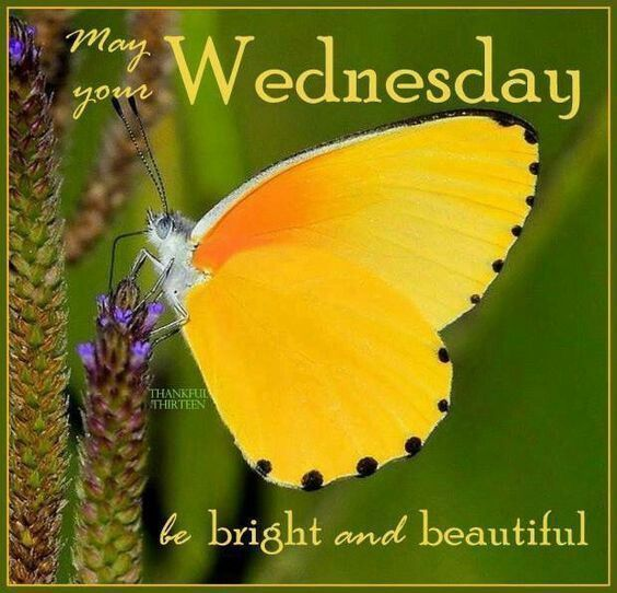 May Your Wednesday Be Bright And Beautiful wednesday happy wednesday wednesday…