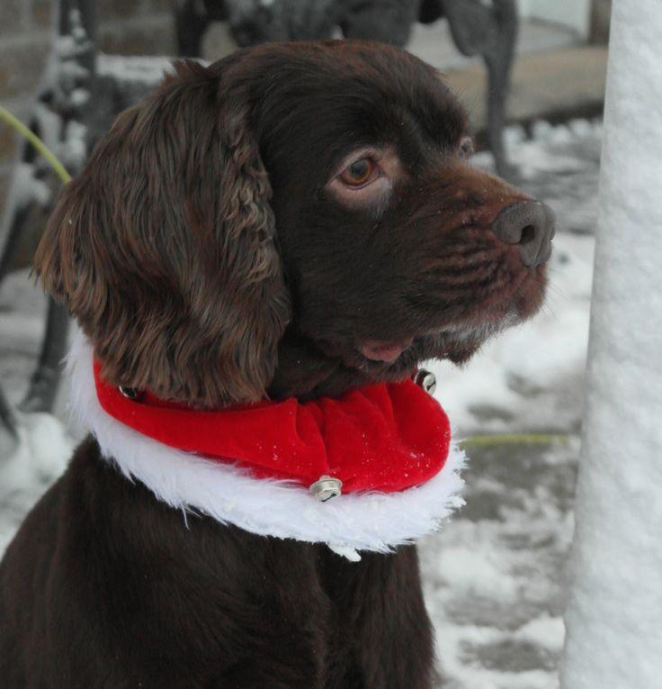 Chocolat en lutin de Noël