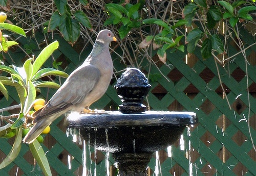 Contemporary Bird Baths | Bird Bath Fountain Designs  birdbathfountaindesigns.info