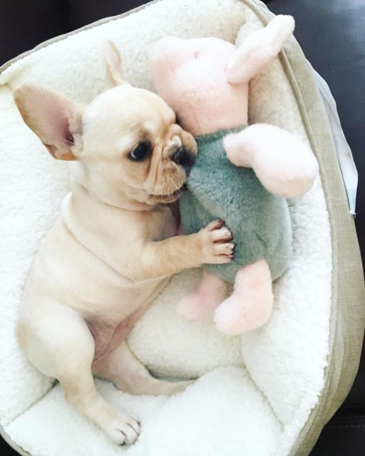 Cuddles with piglet ❤️                                                       …