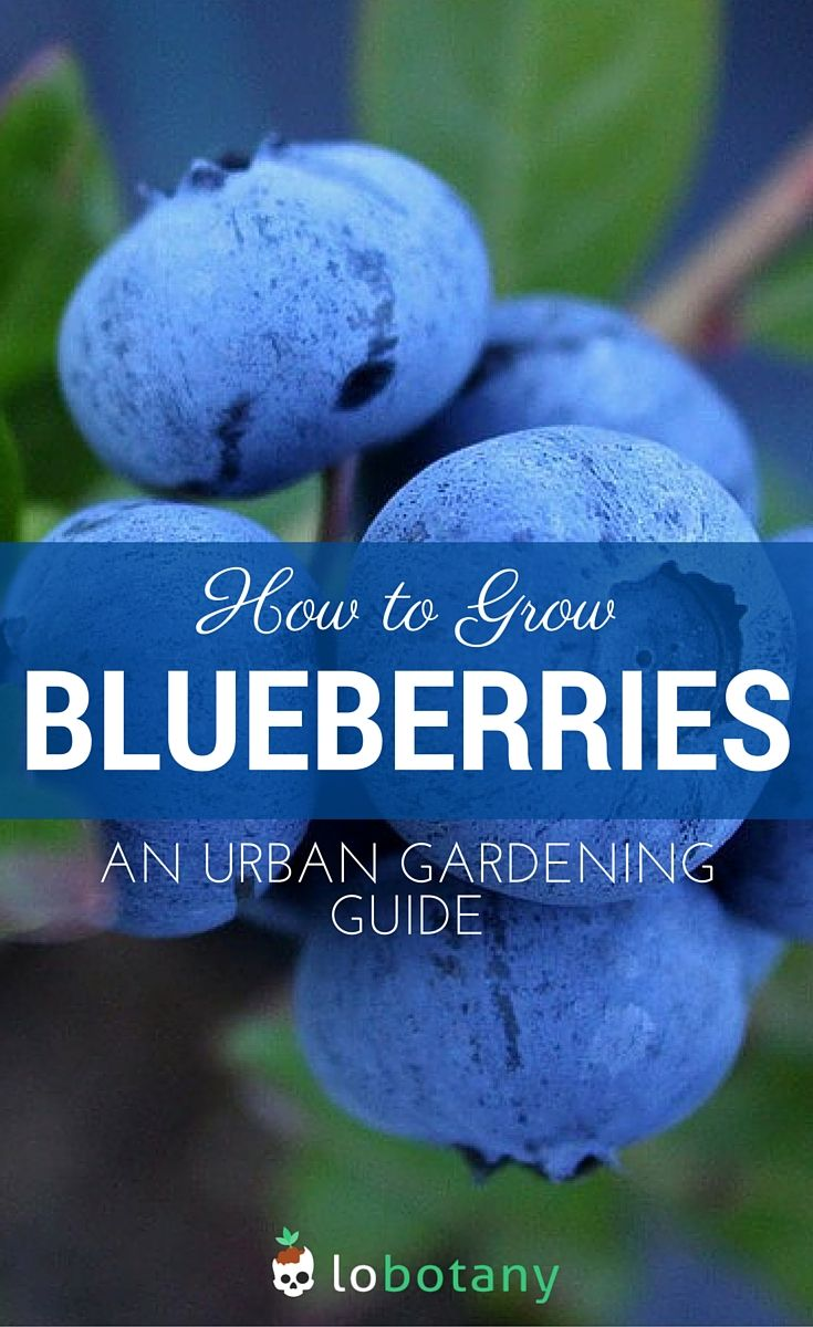 335 best gardening love images on pinterest