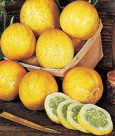 Cucumber, Lemon  HEIRLOOM. Lemon yellow cucumbers are tender and sweet, excellent for salads and pickling.