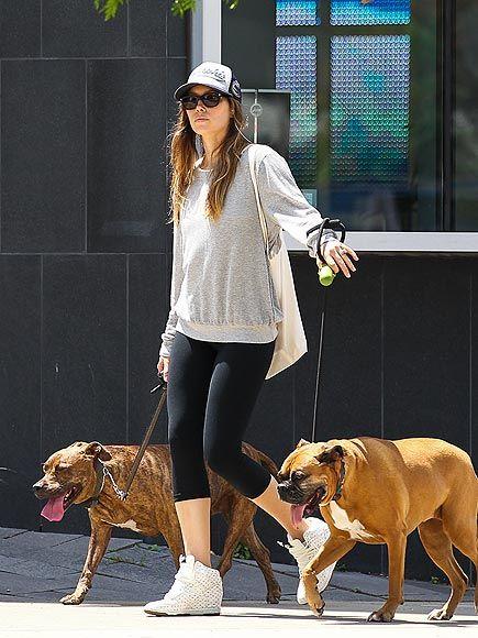 Hollywood & Celebrity Pet News