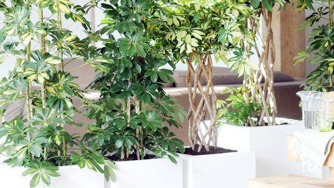 1000 ideas about paravent jardin on pinterest pare vue - Plante d interieur facile ...