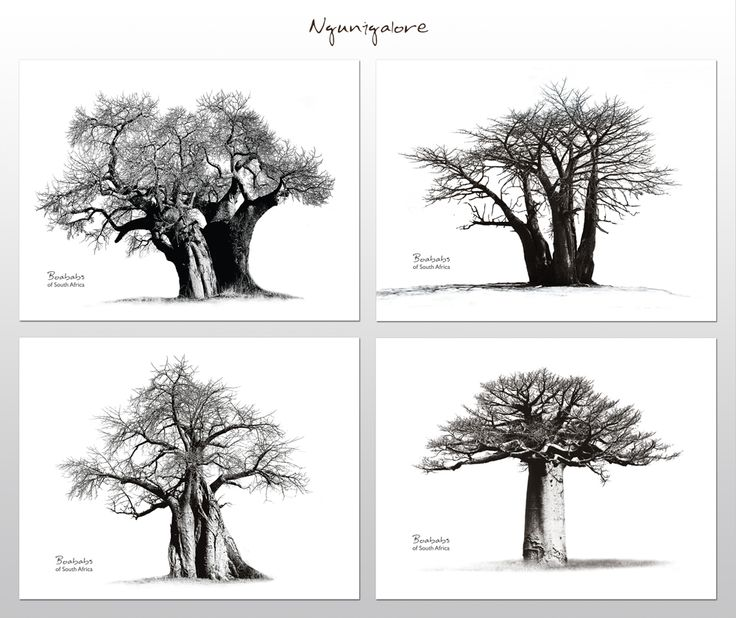 Baobabs of South Africa - Placemats     These placemats bear beautiful photographs of Africa's iconic Baobab trees.    Buy online at NguniGalore.com - Delivery to anywhere in South Africa is FREE