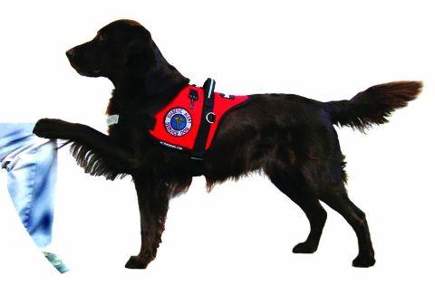 Diabetic Alert Dog Training