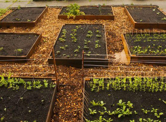 Ter uma horta em casa tem se tornado cada vez mais um hábito e uma grande realização. Além do prazer de cultivar os seus próprios alimentos, você tem a garantia de alimentos