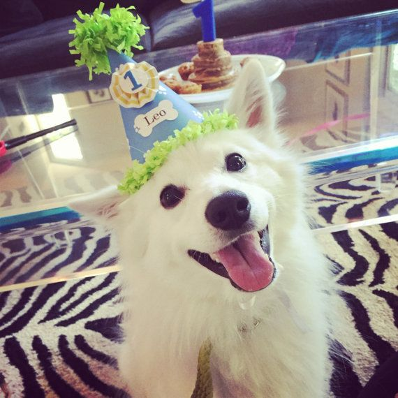 Birthday hats for dogs  https://www.etsy.com/listing/161493992/boy-dog-party-hat-personalized