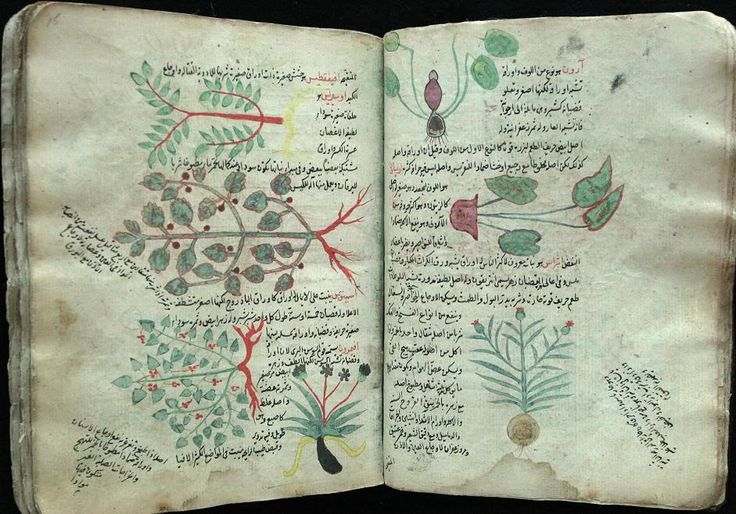 botanical medieval drawings fig - Google Search