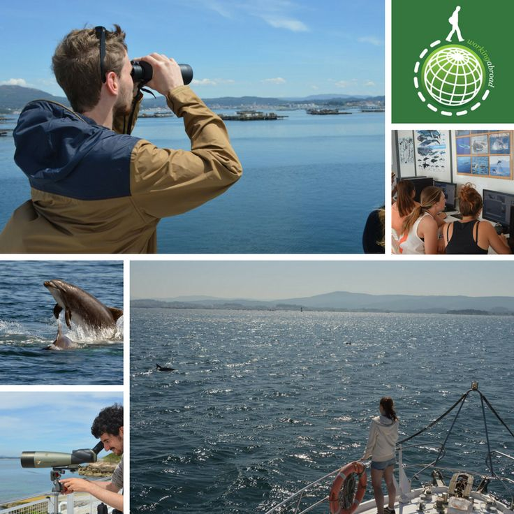 Beautiful pictures of volunteers from our Dolphin Research project in Spain! Join us in Galicia all year round!