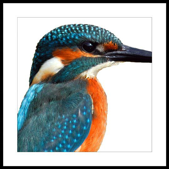 Republic Bird Of Paradise – Kingfisher Fold Living / Artwork