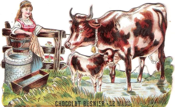Oblaten Glanzbild scrap diecut chromo Kind child Kuh cow calf Chocolat Besnier
