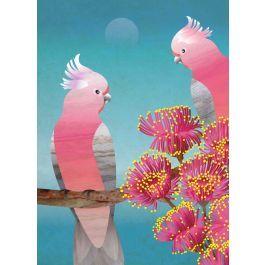 Blossoming Galahs