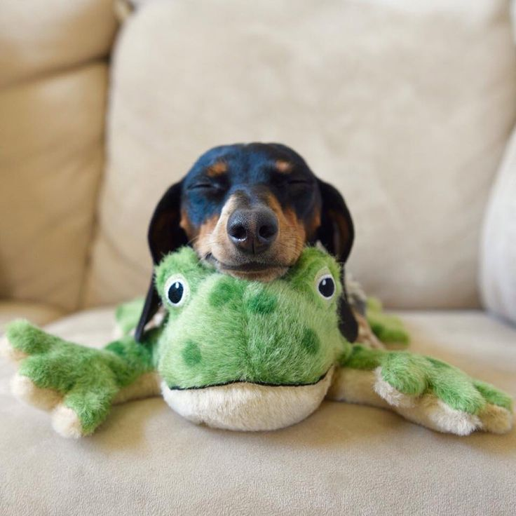 """I am one with the froggy,"" said a peace and zen little puppy."