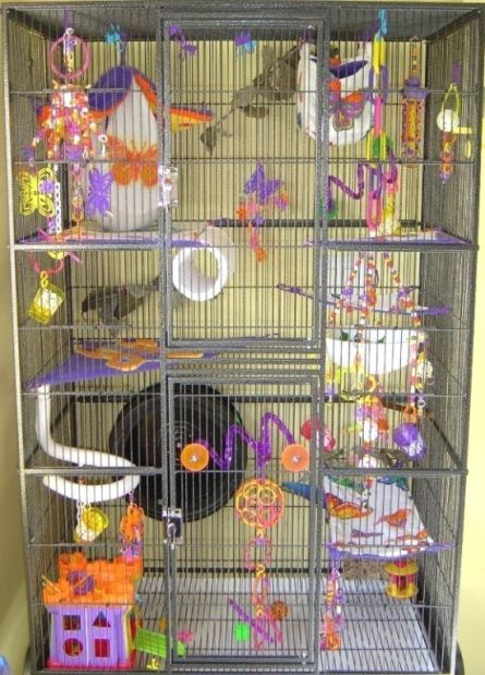 Sugar Glider Cage For Sale Do You Know Types Of Materials
