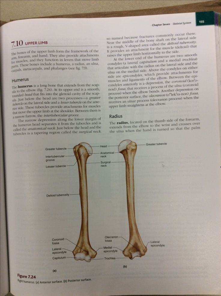 Excepcional Anatomy And Physiology Chapter 7 Skeletal System ...
