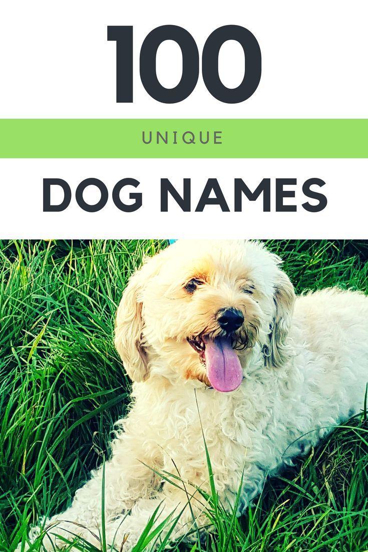 100 Unique Dog Names Celebrity Dog Names Most Popular Dog Names Dognames Uniquedognames Unusualdognames Popul Dog Names Dog Names Unique Popular Dog Names