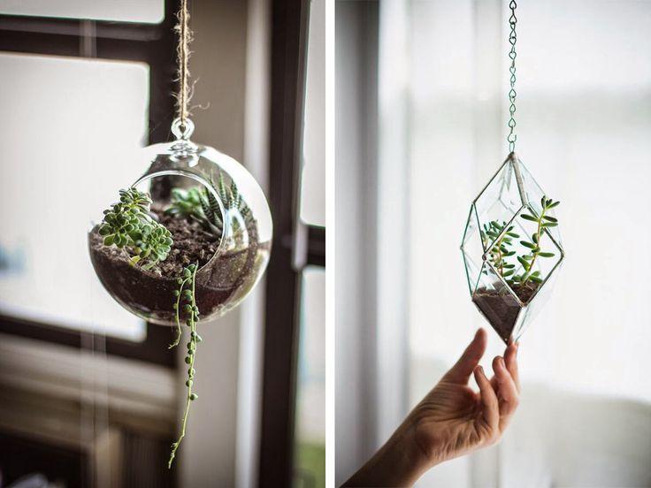 boule-verre-plante-grasse-suspendue-plafond-bocal-terrarium.jpg 1200×900 pixels