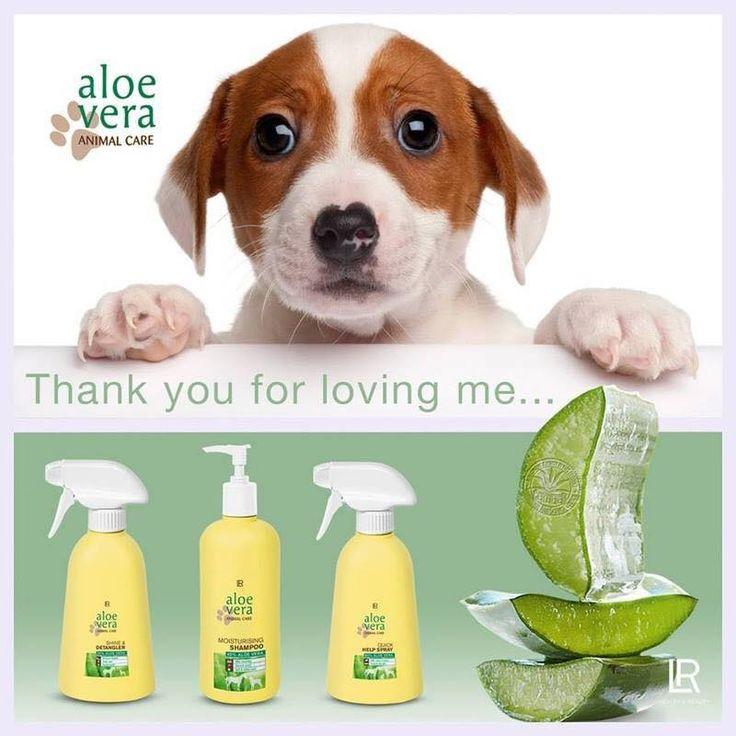 Aloe vera dierenverzorgingsset. Ideale set voor de verzorging van de vacht van uw huisdier. Ook voor het verzorgen van wonden.