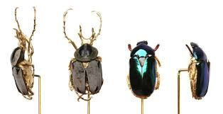 ANABELA CHAN-UK jewellery - Pesquisa do Google Selections from the Beetle Brooch series.