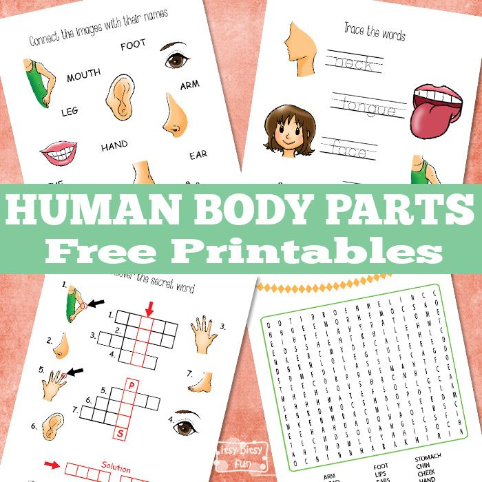 Ready for some gentle learning about the human body parts?  This week's printable pack is all about practicing the parts of the human body with these 5 free printable worksheets. Solve crossword puzzles, find the hidden words, trace letters, there's a worksheet for everyone in this printable pack. Human Body Parts Worksheets Have fun...Read More »