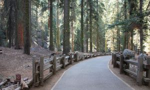 Get lost exploring all Sequoia National Park has to offer - Posted on Roadtrippers.com!
