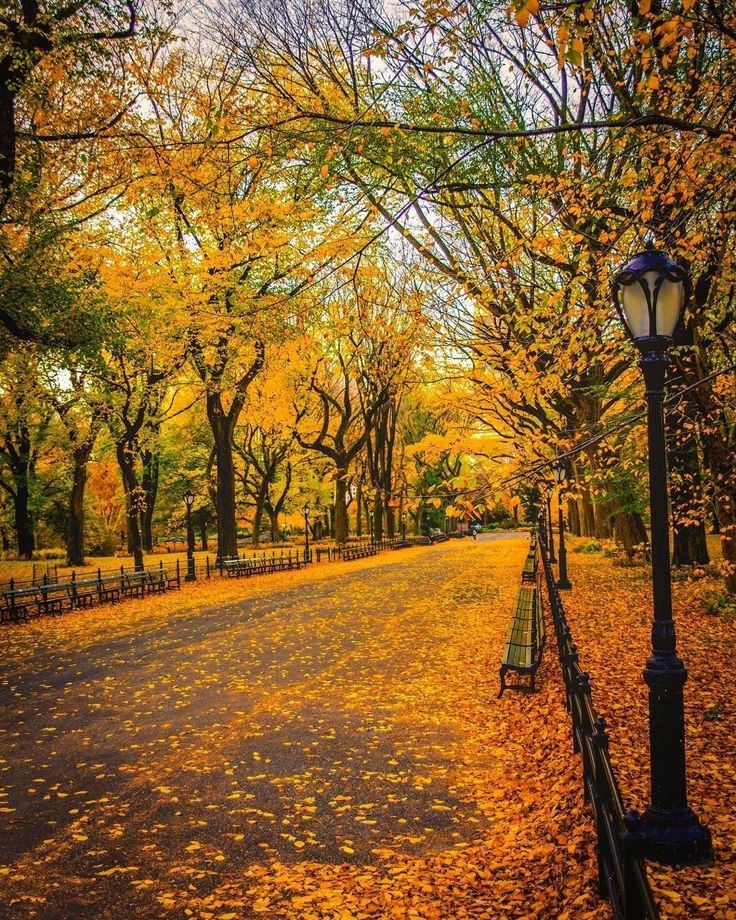 Autumn at The Mall in Central Park by Mike Gutkin - The Best Photos and Videos of New York City including the Statue of Liberty, Brooklyn Bridge, Central Park, Empire State Building, Chrysler Building and other popular New York places and attractions.