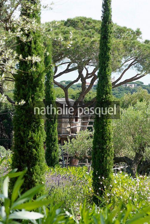 17 best ideas about cupressus sempervirens on pinterest mediterranean garden grasses and - Cypres d italie totem ...