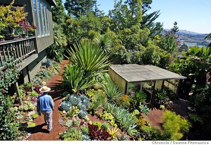 17 best images about succulent and cactus garden ideas on for Garden design mill valley