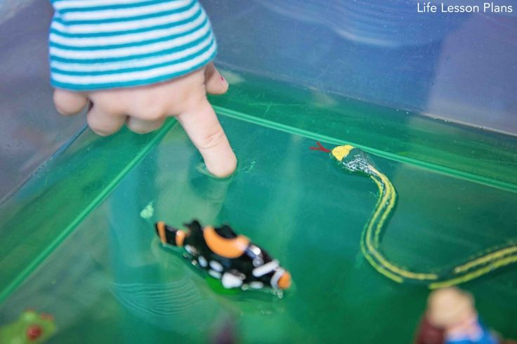 A Jello Pond Sensory Bin from Life Lesson Plans. Perfect for spring and bugs, frogs