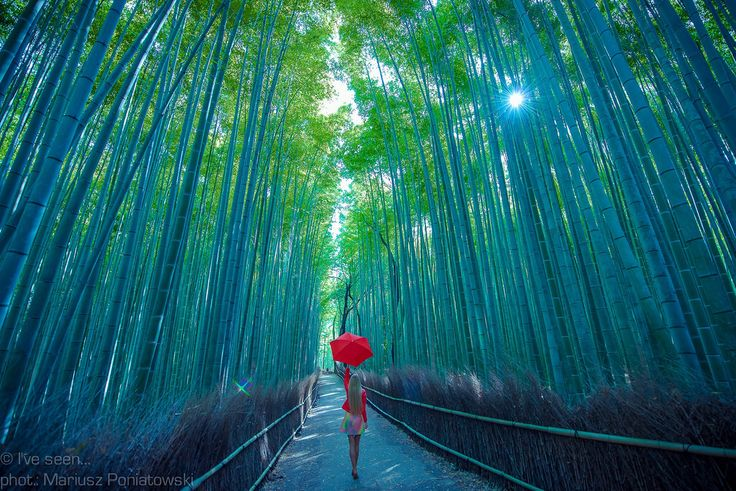 Arashiyama Bamboo Forest, Kyoto, Japan  Travel to Japan with @iveseen_