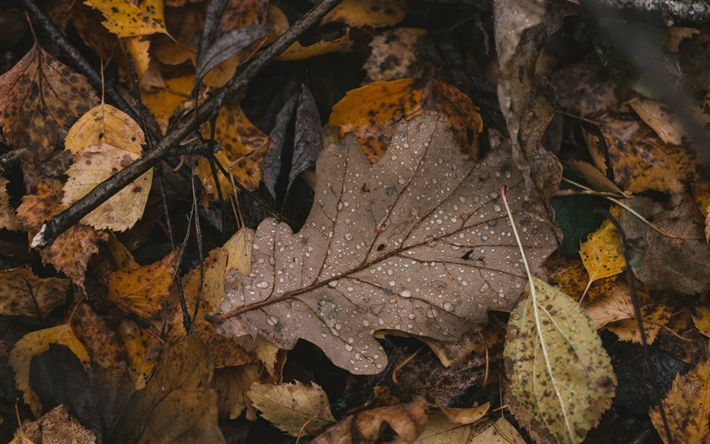 Download wallpapers fallen leaf, autumn, dry leaves, drops of dew