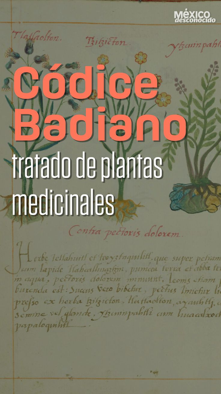 Alchemist, Gardening, China, Natural, Herbal Medicine, Healthy Bodies, Herbalism, Medicinal Plants, Health And Wellness
