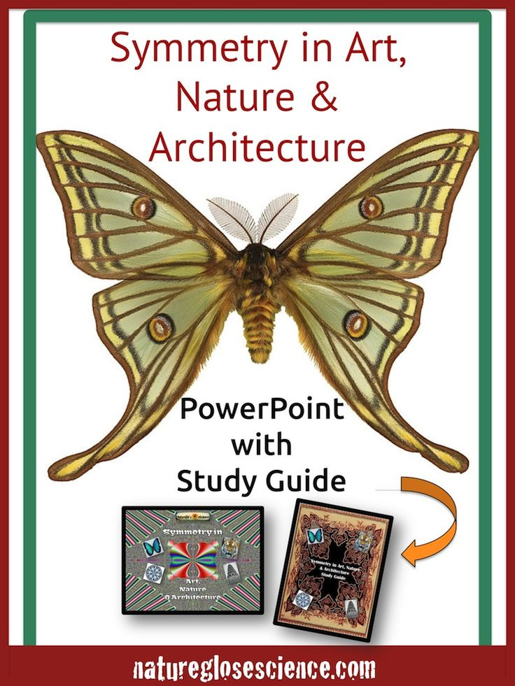 Line Definition In Art : Best images about math patterns in nature on pinterest