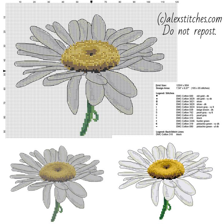 A beautiful daisy flower cross stitch pattern with back stitch