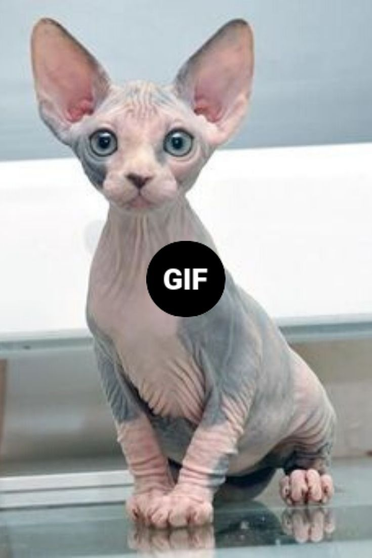 Pin On Cute Funny Animals