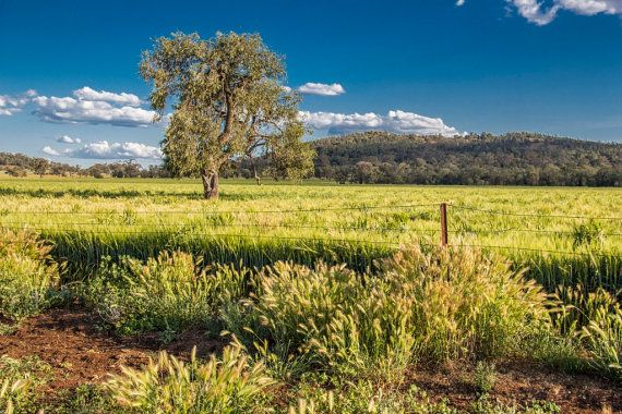 Australian Agricultural Landscape by PictureWildlife on Etsy
