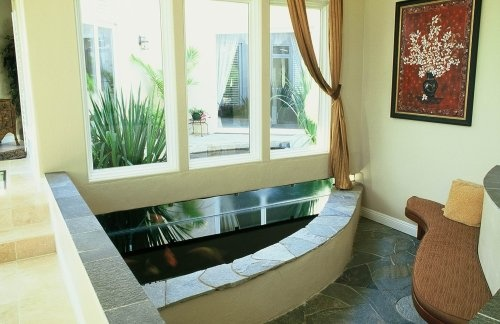 17 best images about indoor koi pond on pinterest for Indoor koi aquarium