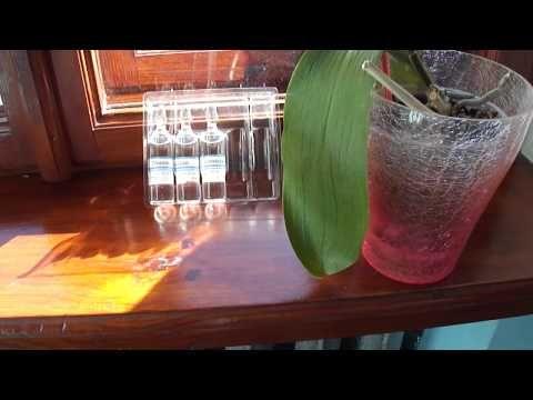 Глюкоза или метод первой помощи орхидеям с вялыми листьями - YouTube