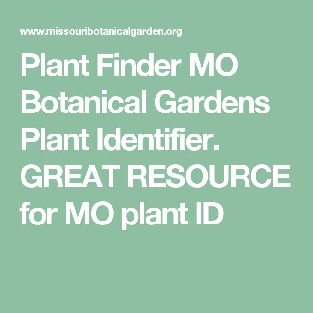 Plant Finder MO Botanical Gardens Plant Identifier. GREAT RESOURCE ...