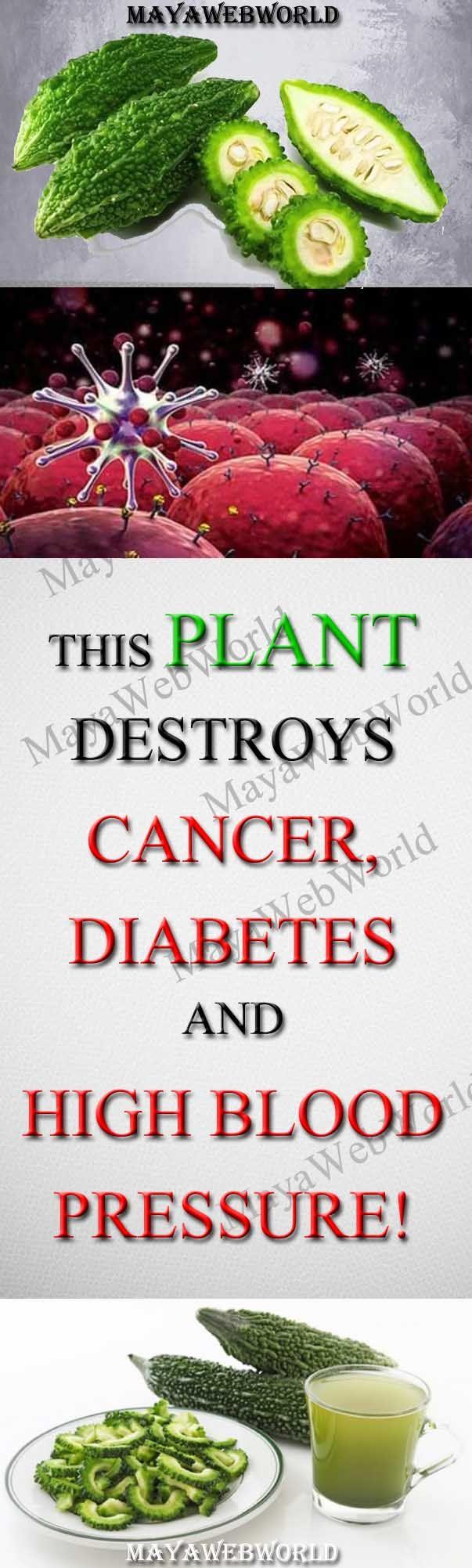 This plant destroys Cancer, Diabetes And High Blood Pressure! – MayaWebWorld