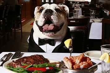 Butler University's Real-Life Bulldog Mascot Is The March Madness MVP