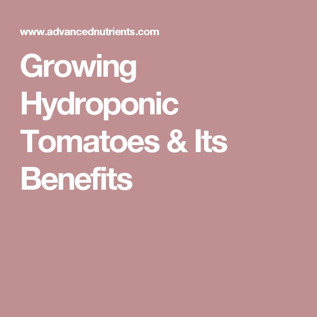 Growing Hydroponic Tomatoes & Its Benefits