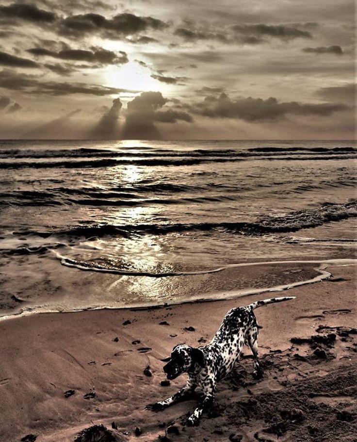 Buen lunes y buena semana desde #Alifornia!  Alucinante imagen de la Playa de San Juan. 🌅😍 #Alicante #CostaBlanca
