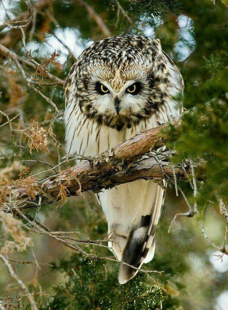 Very Wise Bird...