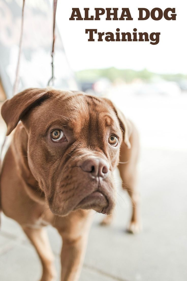 Alpha Dog Training: How to Teach Your Dog to See You as the Pack Leader | http://DogVills.com